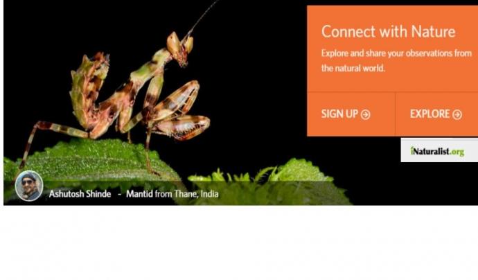 Cada observació contribueix a l'estudi de la biodiversitat (imatge: inaturalist.org)