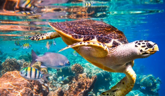 Més d'un milió d'espècies animals i plantes es troben en risc d'extinció. Font: IPBES
