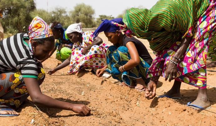 La Gran Muralla Verda forma part de projecte She grows executat per l'ONG Tree Aid a la regió maliana de Koulikoro. Font: Departament d'Acció Exterior i Govern Obert