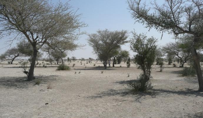 La iniciativa pretén frenar l'avenç de la desertificació al Sàhara amb la creació d'una frontera natural d'arbres. Font: Llicència CC