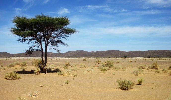 Senegal, Mauritània, Mali, Burkina Faso, Níger, Nigèria, el Txad, Sudan, Etiòpia, Eritrea i Djibouti, són els territoris on actua la Gran Muralla Verda africana. Font: Llicència CC