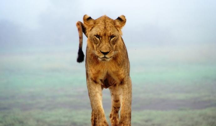 Els animals salvatges tenen dret a la llibertat. Font: Unsplash. Font: Font: Unsplash.