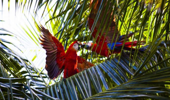 A l'Amazònia es concetra el 10% de la biodiversitat de tot el món. Font: unsplash. Font: Font: Unsplash.