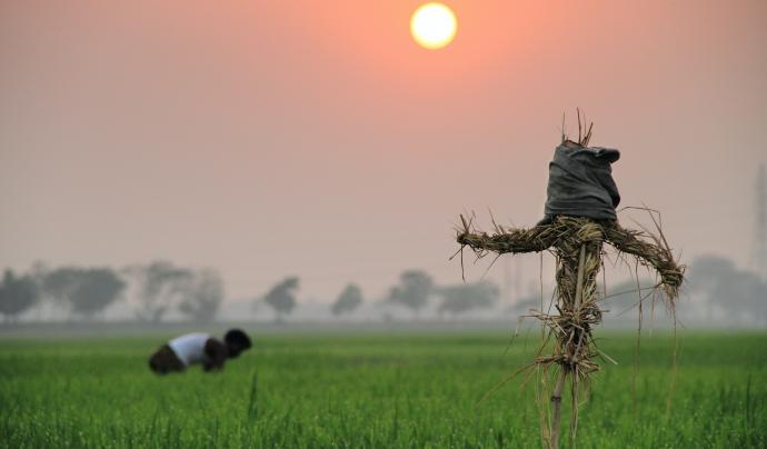 Imatge d'arxiu de cultius a Bangladesh. Font: Ariful Haque