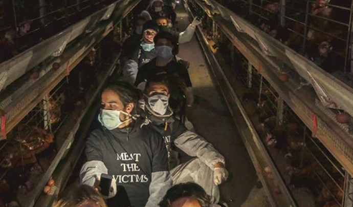 Acció de la campanya Meat the Victims Font: Action for Liberation