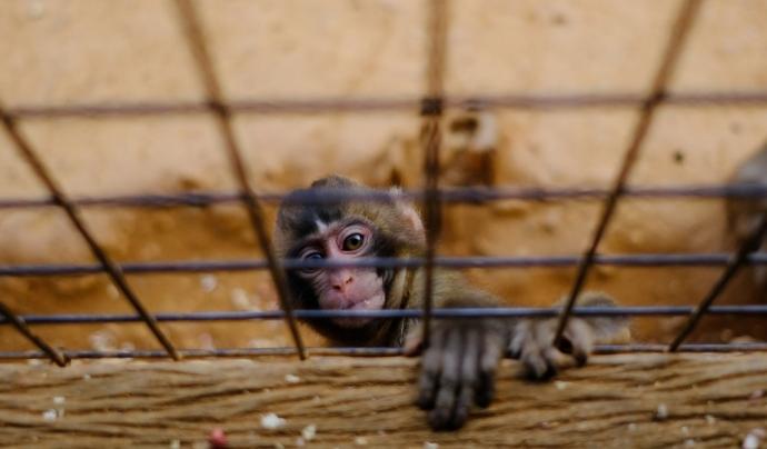 Un zoològic ha de prioritzar per davant de tot la seva tasca conservacionista. Font: Unsplash. Font: Font: Unsplash.