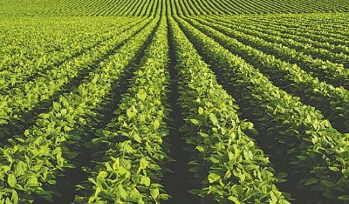 Cultiu de vegetals