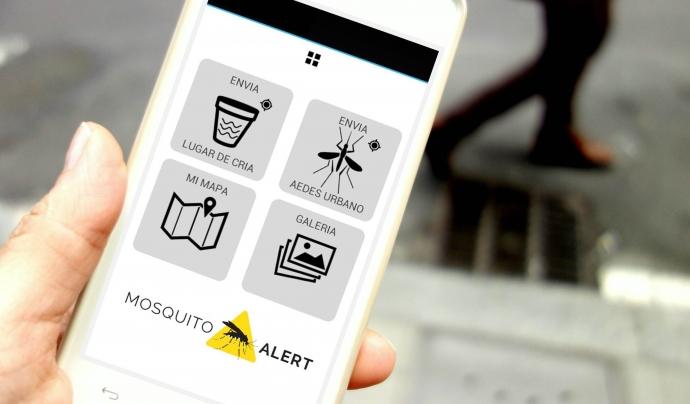 Amb Mosquitoalert s'aporta informació sobre la presència de mosquit tigre i de mosquit de la febre groga (imatge: mosquitoalert)