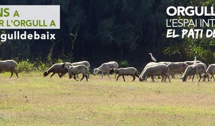Agricultura i infraestructures defineixen el paisatge del Baix Llobregat (imatge: orgulldebaix)