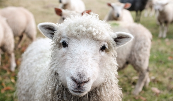 Tot animal de treball té dret a gaudir d'un límit en el temps i en la intensitat del seu treball. Font: Unsplash. Font: Font: Unsplash.