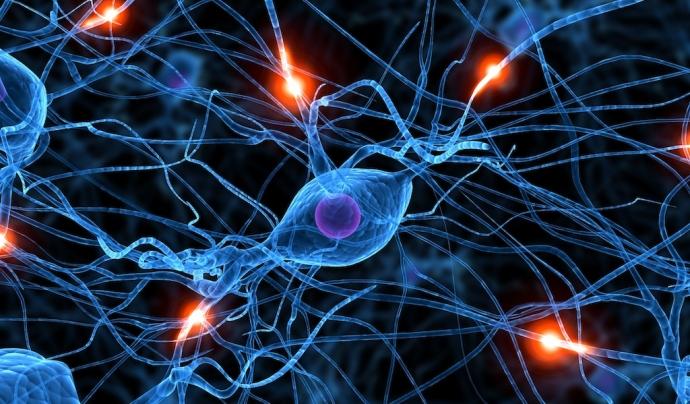 Imatge del sistema nerviós Font: Pinterest