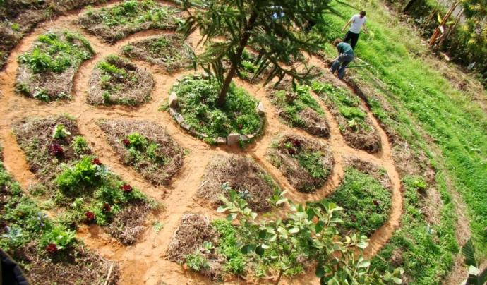 Un dels objectius d el'intercanvi és aprendre permacultura