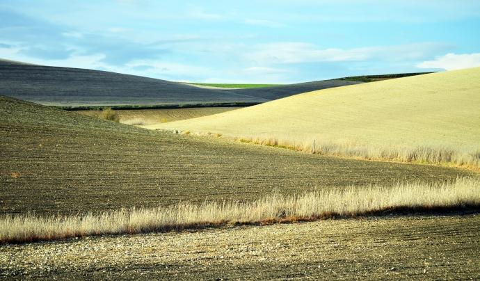 Vàries entitats demanen que els fons de recuperació europeus es destinin a una transició justa i sostenible del sector agroalimentari. Font: Pixabay