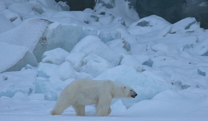 Un dels objectius és adoptar mesures urgents per a combatre el canvi climàtic i els seus efectes. Font: Unsplash. Font: Font: Unsplash