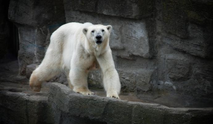 Cap animal no ha d'ésser explotat per divertiment de l'ésser humà. Font: Unsplash. Font: Font: Unsplash.