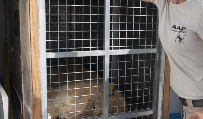 La Fundació Primadomus és l'únic centre de l'Estat espanyol que acull felins Font: Fundació Primadomus
