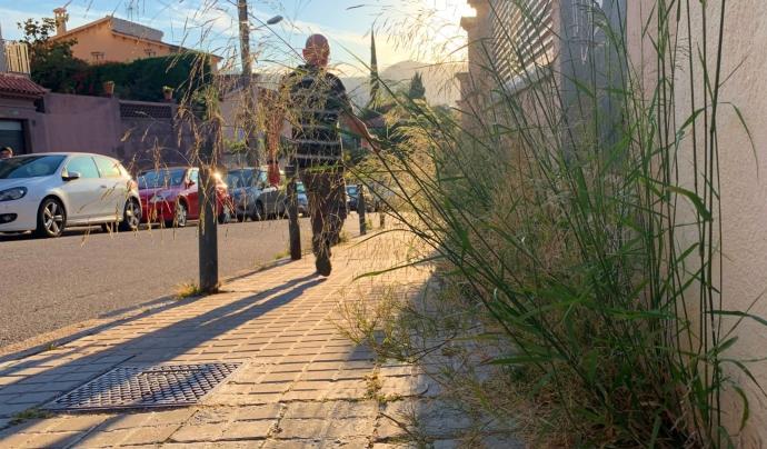La vegetació silvestre omple els carrers del barri de la Font d'en Fargues a Barcelona. Font: David Carrillo