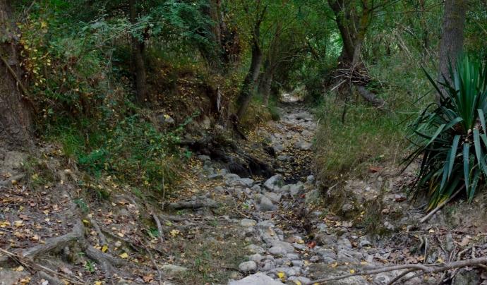 Bosc Verd - EdC denuncia que la mala gestió hídrica del riu Foix està causant la mort de milers de peixos. Font: Bosc Verd - EdC.