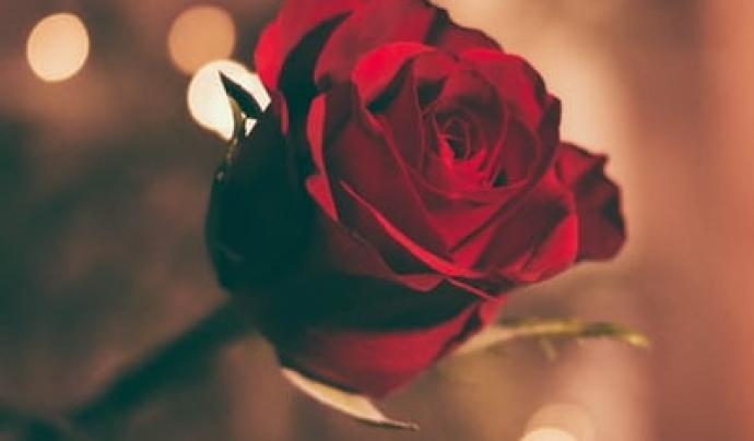 Totes les persones que vulguin participar poden escollir entre una rosa d'hospital per omplir els centres sanitaris de roses o bé una rosa solidària per qualsevol altra persona. Font: Unsplash. Font: Font: Unsplash.
