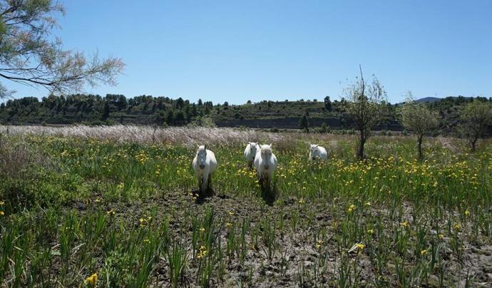 El Grup de Natura Freixe  es pren cura de l' espai fluvial situat a la vora de l'Ebre al seu pas per Flix. (imatge: Grup de Natura Freixe)
