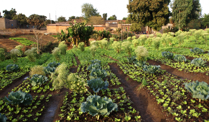 Pla de sobirania alimentària a Burkina Faso