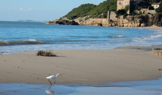 El darrer duimenge de cada mes l'Associació Mediambiental La Sínia convida a conèixer els valors naturals de la platja de Tamarit (imatge: riugaia.cat)