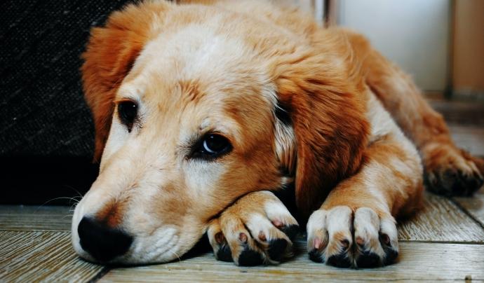 La pirotècnia pot generar en els animals taquicàrdia, tremolors, falta d'aire, nàusees, atordiment, pèrdua de contro i fins i tot la mort. Font: Pexels (Llicència: CC)