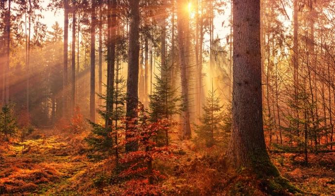 El congrés és un aliat alhora de custodiar boscos d'interès, genera un nou producte ecoturístic i serveis públics de salut i benestar. Font: Unsplash. Font: Font: Unsplash.