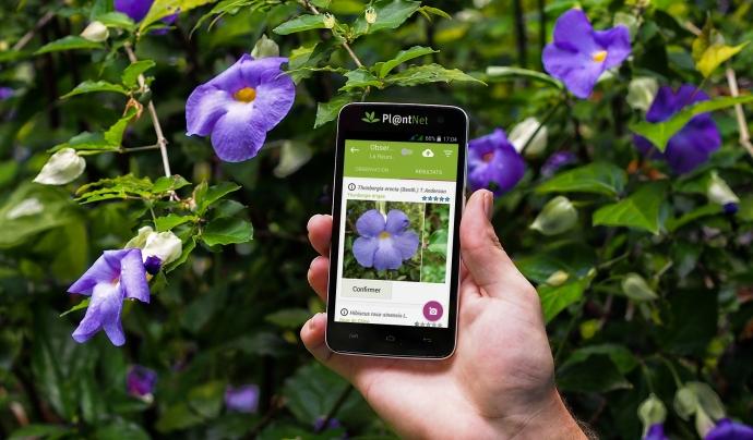 L'aplicació PlantNet identifica plantes a partir de fotografies de manera col·laborativa. Font: PlantNet