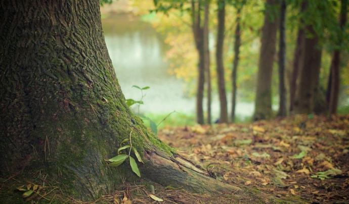 Les 5 entitats demanen apostar per un estil de vida més sostenible ara que l'activitat contaminant ha cessat a causa del confinament. Font: Pixabay
