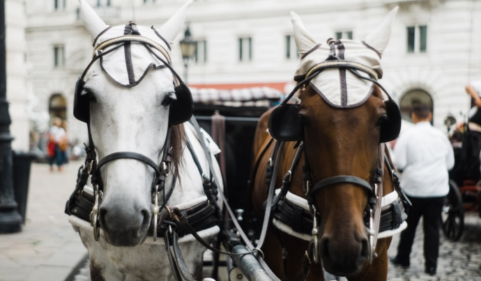 Fa uns anys, ja va morir un cavall als Tres Tombs per esgotament. Font: Unsplash. Font: Font: Unsplash.