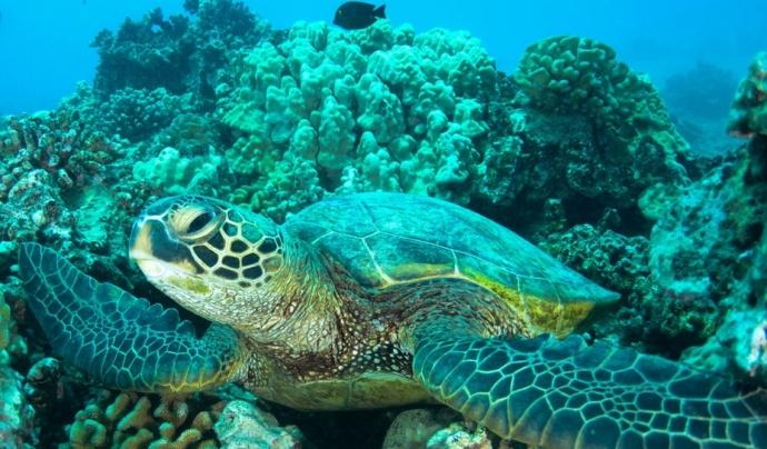 Al 2018, el centre va rescatar 69 tortugues marines. Font: Unsplash. Font: Font: Unsplash.