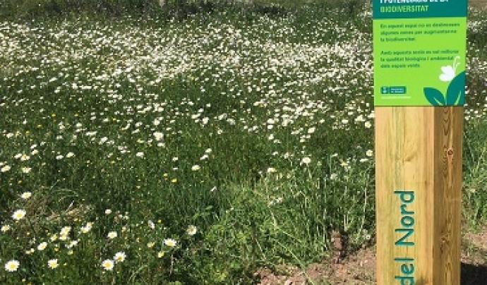 Parc nord de Sabadell, un dels punts forts verds de la ciutat. Font: Sostenible.cat