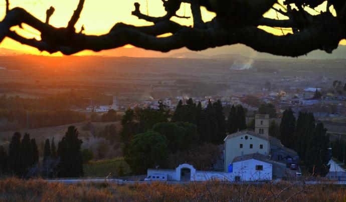 Imatge de les vinyes d'Albet i Noya, una de les parades del Fem Camí'18