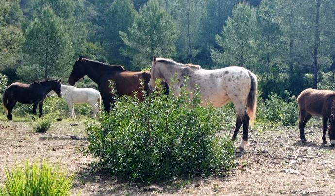 A la Fundació hi viuen més de setanta equins. Font: Fundació Miranda