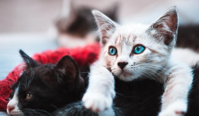 La manera de reduir l'abandonament és generar consciència ciutadana al voltant de la tinença responsable dels animals de companyia. Font: Unsplash. Font: Font: Unsplash.