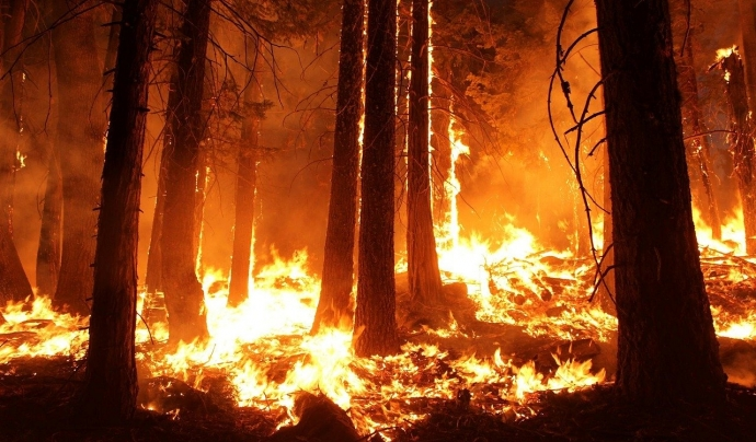 Ja han cremat més de 10 hectàrees i han mort 28 persones. Font: CC