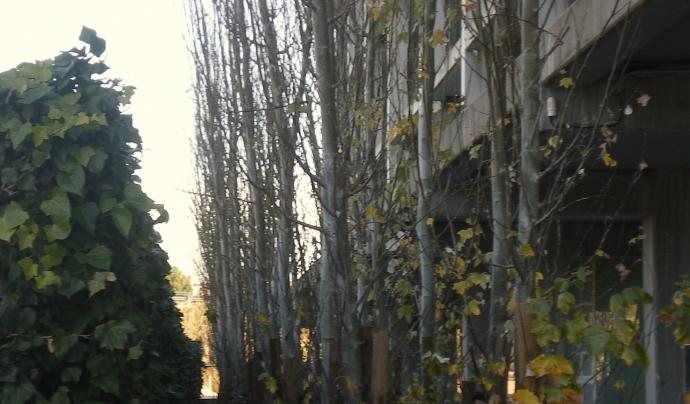 Xops plantats davant la facultat d'Economia i Empresa de la URV. Font: URV