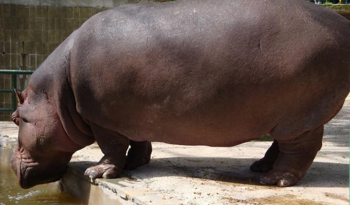 Des del Zoo de Barcelona asseguren que molt sovint no és possible dictaminar fefaentment una causa clara de la mort, ja que aquesta es pot deure a la confluència de nombrosos factors. Font: CC