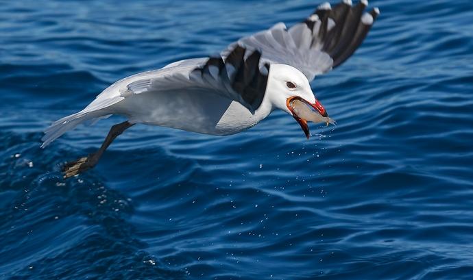Sortida d'ocells marins amb el Gepec
