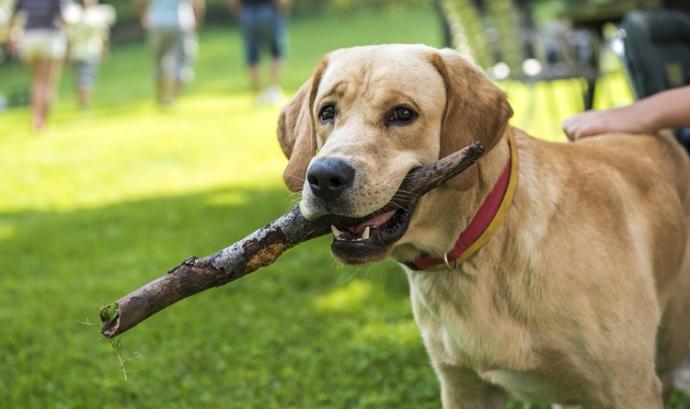 Ensinistrament de gossos de companyia (imatge; gencat.cat) Font: