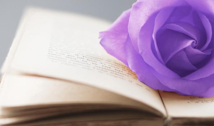 Llibre amb una rosa lila. Font: Plataforma unitària contra les violències de gènere