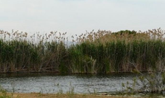 Can Dimoni al Delta del LLobregat (imatge: adenc)
