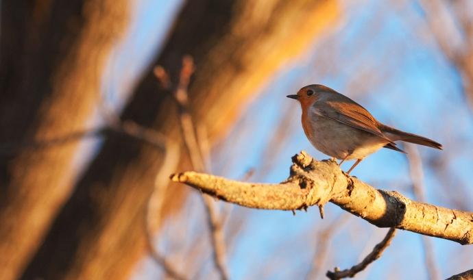 Sortida d'ornitologia al Parc Grípia-Ribatallada amb l'Adenc  (imatge: flickr/michelecatania)