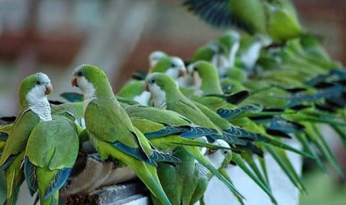 3era trobada animal a Barcelona dedicada a la gestió ètica de la fauna urbana (imatge: Animal Latitude)