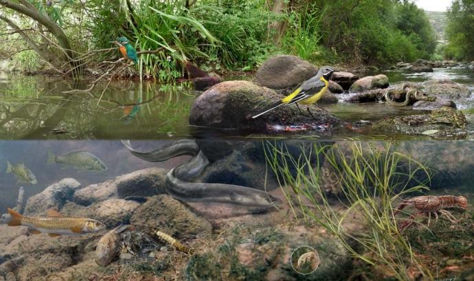 Jornada de voluntariat ambiental amb l'Associació Cen al riu Francolí (imatge: assoc cen)