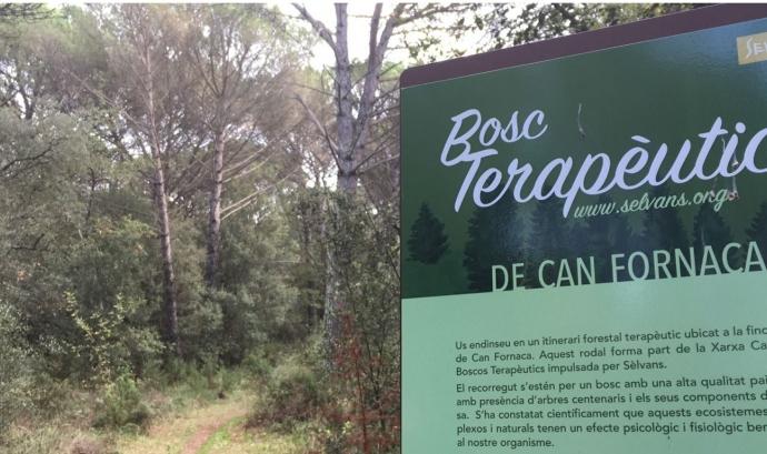 Diverses empreses donen suport a l'Associació Selvans per la conservació de boscos madurs Font: Associació Sèlvans