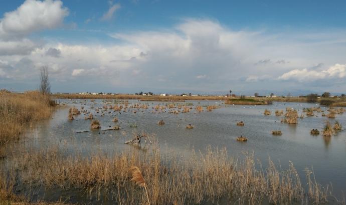 Riet Vell, finca en custòdia del territori amb l'entitat Seo Bird Life Font: flickr/diluvi