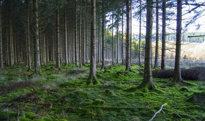 Els boscos són ecosistemes molt sensibles i hi han molts projectes que els cuiden. Fotografia de Tim Gordon. Llicència d'ús CC BY-ND 2.0 Font: Tim Gordon. Llicència d'ús CC BY-ND 2.0