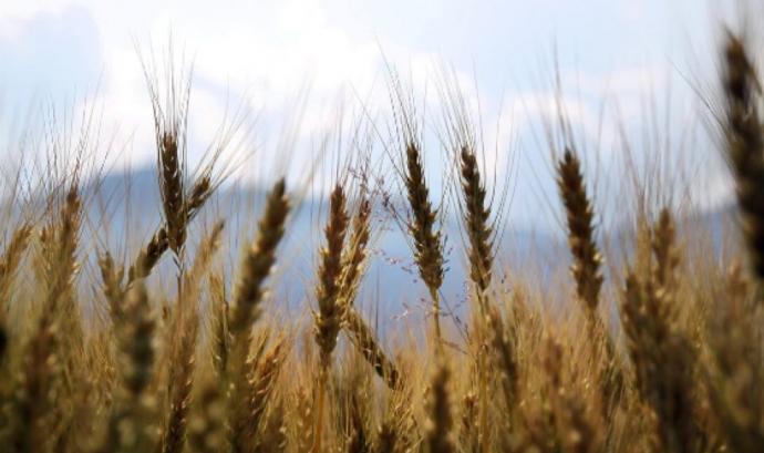 L'anuari de la sobirania alimentària es pot consultar en línia. Font: Anuari de la sobirania alimentària
